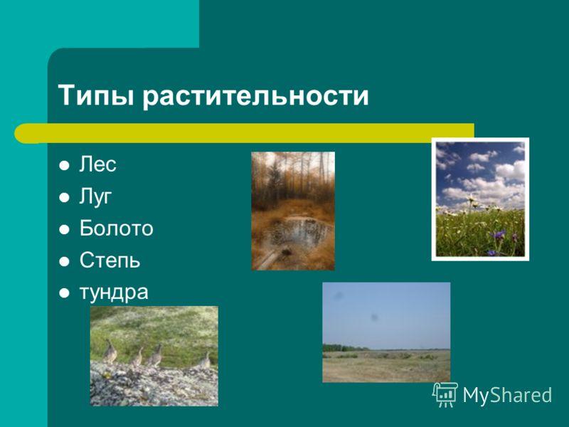 Типы растительности Лес Луг Болото Степь тундра