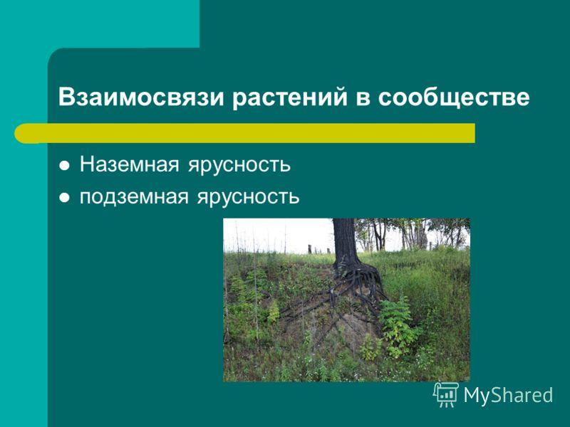 Взаимосвязи растений в сообществе Наземная ярусность подземная ярусность