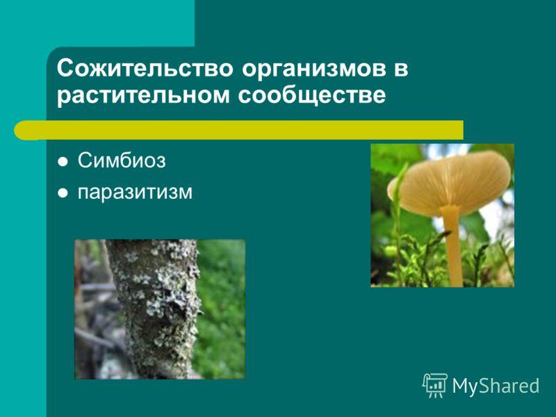 Сожительство организмов в растительном сообществе Симбиоз паразитизм