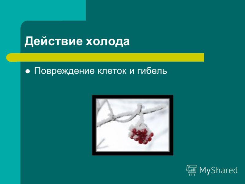 Действие холода Повреждение клеток и гибель