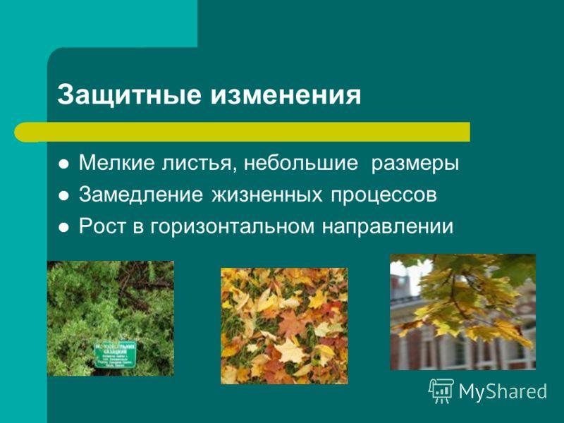 Защитные изменения Мелкие листья, небольшие размеры Замедление жизненных процессов Рост в горизонтальном направлении
