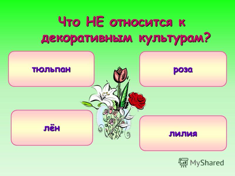 Что НЕ относится к декоративным культурам? лён тюльпан роза лилия