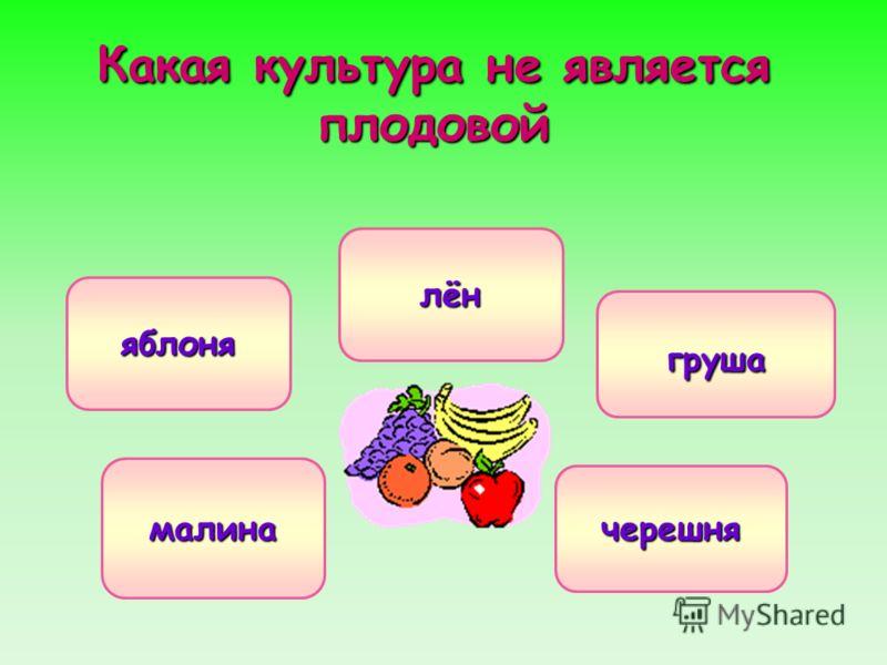 Какая культура не является плодовой лён яблоня груша малина черешня