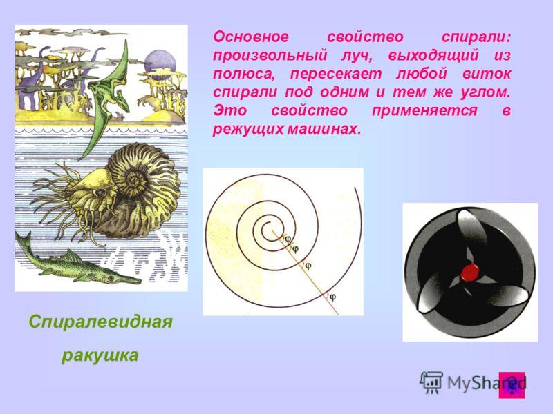 Спиралевидная ракушка Основное свойство спирали: произвольный луч, выходящий из полюса, пересекает любой виток спирали под одним и тем же углом. Это свойство применяется в режущих машинах.