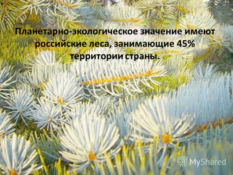 Планетарно-экологическое значение имеют российские леса, занимающие 45% территории страны.
