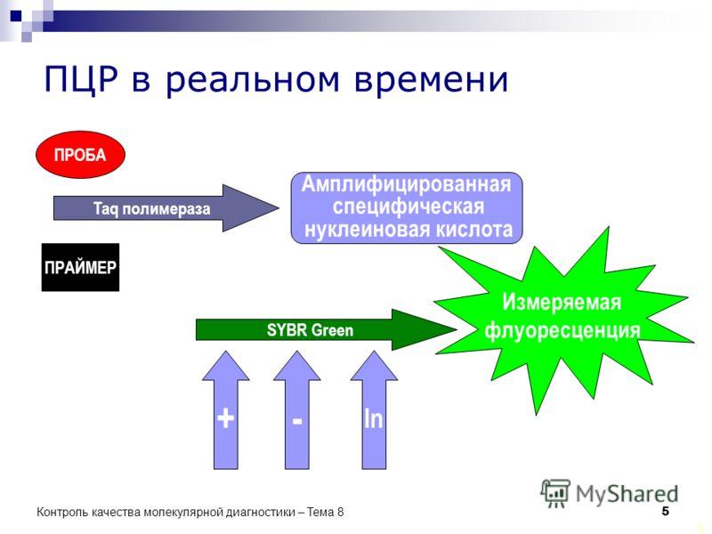 5 5 ПЦР в реальном времени ПРОБА ПРАЙМЕР Taq полимераза Амплифицированная специфическая нуклеиновая кислота SYBR Green Измеряемая флуоресценция +- In