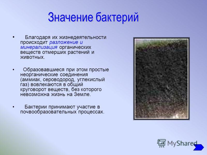 Благодаря их жизнедеятельности происходит разложение и минерализация органических веществ отмерших растений и животных. Образовавшиеся при этом простые неорганические соединения (аммиак, сероводород, углекислый газ) вовлекаются в общий круговорот вещ