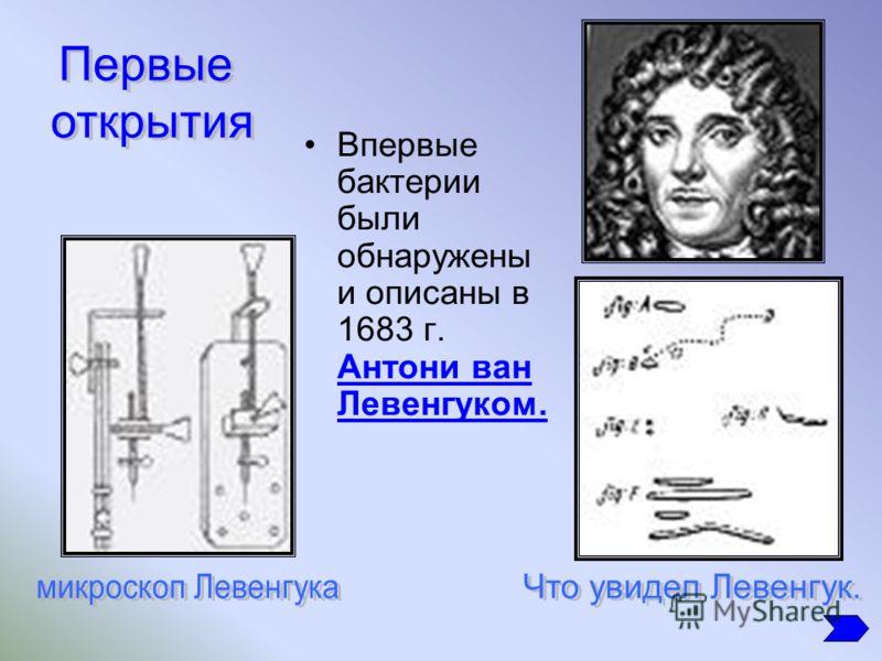 Впервые бактерии были обнаружены и описаны в 1683 г. Антони ван Левенгуком.