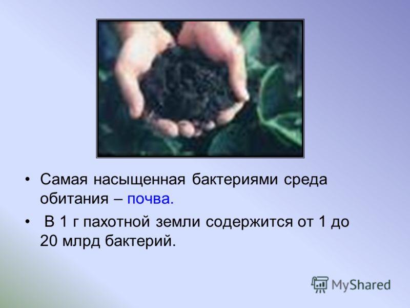 Самая насыщенная бактериями среда обитания – почва. В 1 г пахотной земли содержится от 1 до 20 млрд бактерий.