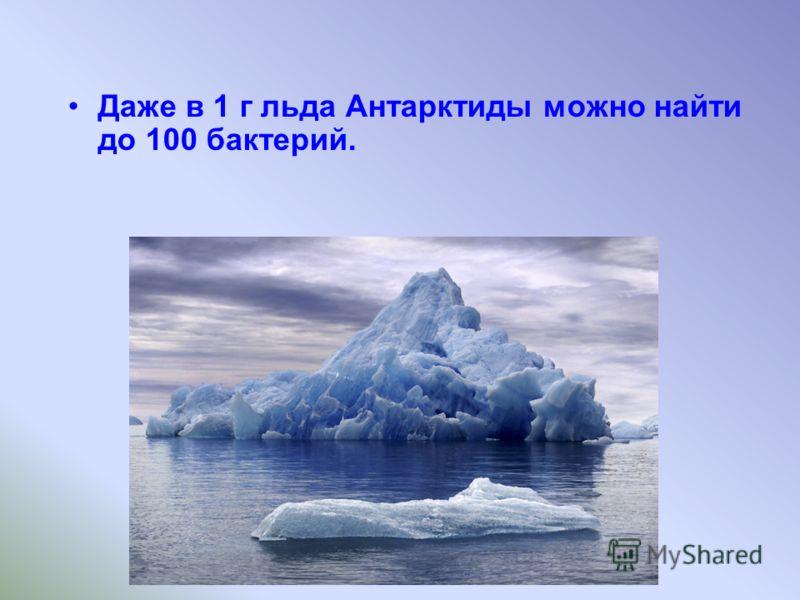 Даже в 1 г льда Антарктиды можно найти до 100 бактерий.