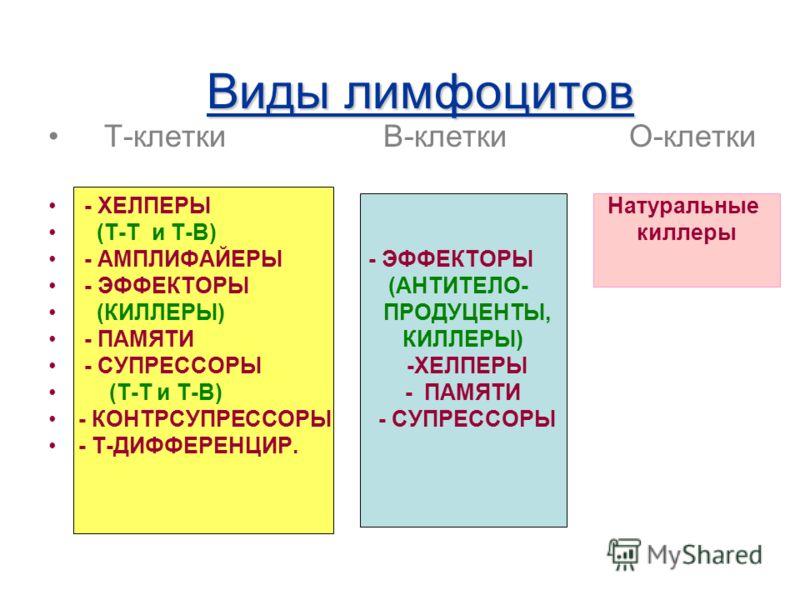 Виды лимфоцитов Т-клетки В-клетки О-клетки - ХЕЛПЕРЫ Натуральные (Т-Т и Т-В) киллеры - АМПЛИФАЙЕРЫ - ЭФФЕКТОРЫ - ЭФФЕКТОРЫ (АНТИТЕЛО- (КИЛЛЕРЫ) ПРОДУЦЕНТЫ, - ПАМЯТИ КИЛЛЕРЫ) - СУПРЕССОРЫ -ХЕЛПЕРЫ (Т-Т и Т-В) - ПАМЯТИ - КОНТРСУПРЕССОРЫ - СУПРЕССОРЫ -