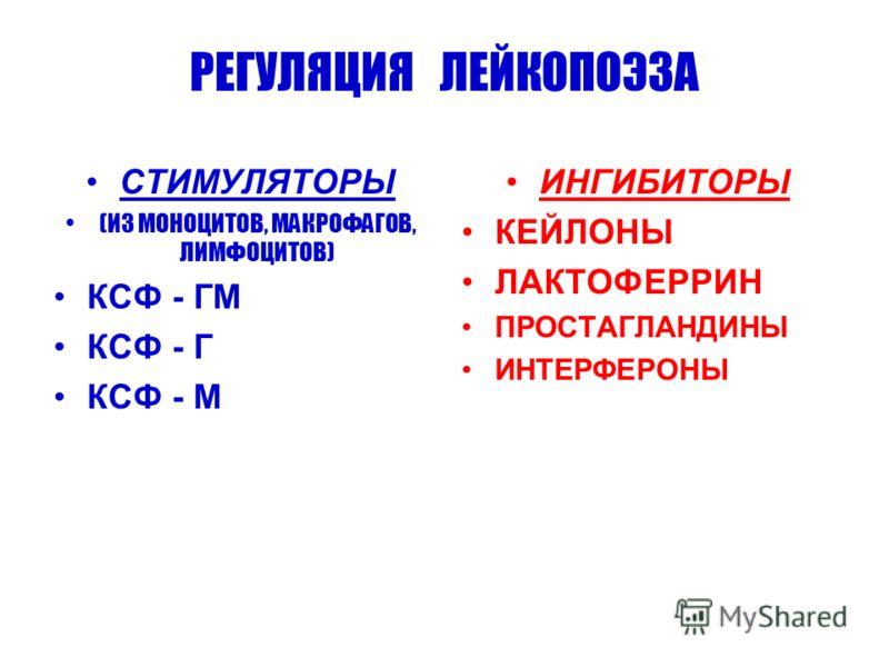 РЕГУЛЯЦИЯ ЛЕЙКОПОЭЗА СТИМУЛЯТОРЫ (ИЗ МОНОЦИТОВ, МАКРОФАГОВ, ЛИМФОЦИТОВ) КСФ - ГМ КСФ - Г КСФ - М ИНГИБИТОРЫ КЕЙЛОНЫ ЛАКТОФЕРРИН ПРОСТАГЛАНДИНЫ ИНТЕРФЕРОНЫ