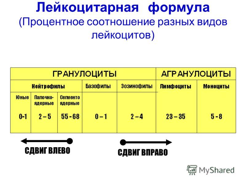 Лейкоцитарная формула (Процентное соотношение разных видов лейкоцитов) СДВИГ ВЛЕВО СДВИГ ВПРАВО