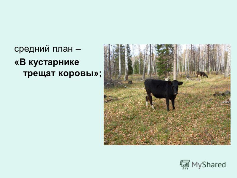 средний план – «В кустарнике трещат коровы»;