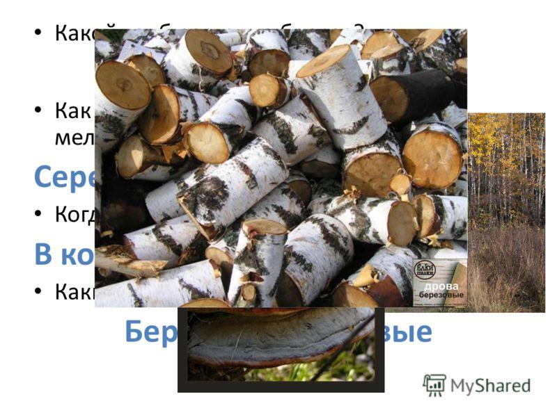 Какой гриб растет на березе? Чага Как называется соцветие в виде кисти мелких цветов, например у ивы, березы? Сережки Когда начинают желтеть листья березы? В конце августа Какие дрова горят самым ярким пламенем? Березовые, дубовые