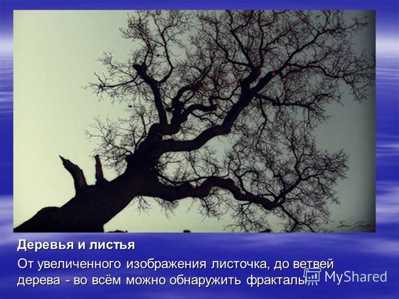 Деревья и листья От увеличенного изображения листочка, до ветвей дерева - во всём можно обнаружить фракталы