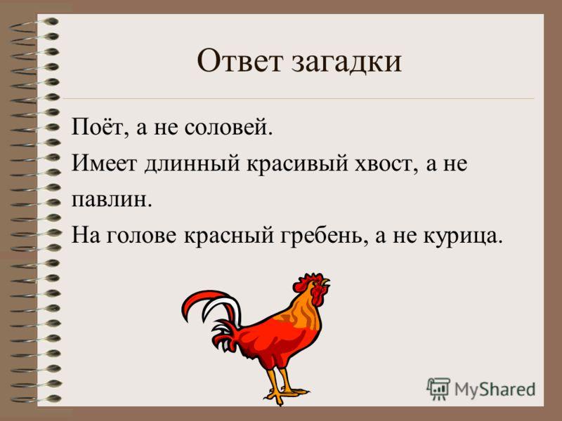 Ответ загадки Поёт, а не соловей. Имеет длинный красивый хвост, а не павлин. На голове красный гребень, а не курица.