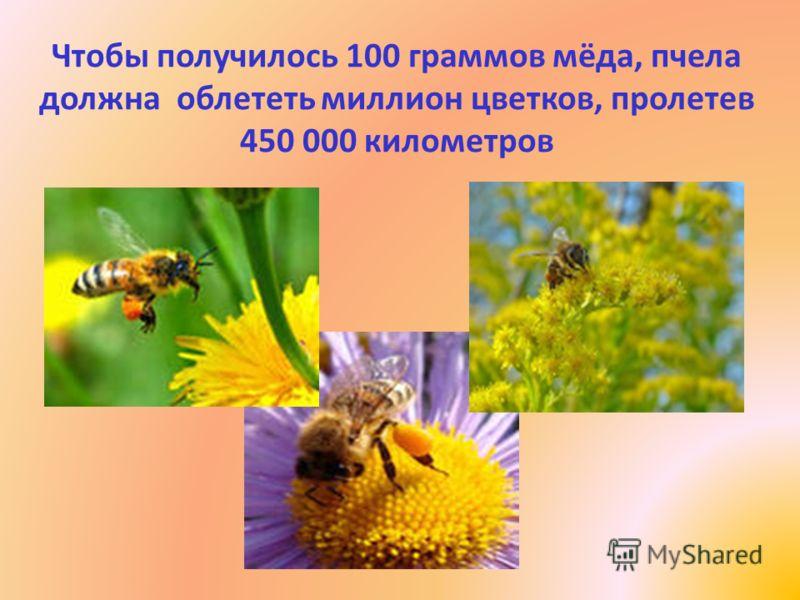 Чтобы получилось 100 граммов мёда, пчела должна облететь миллион цветков, пролетев 450 000 километров