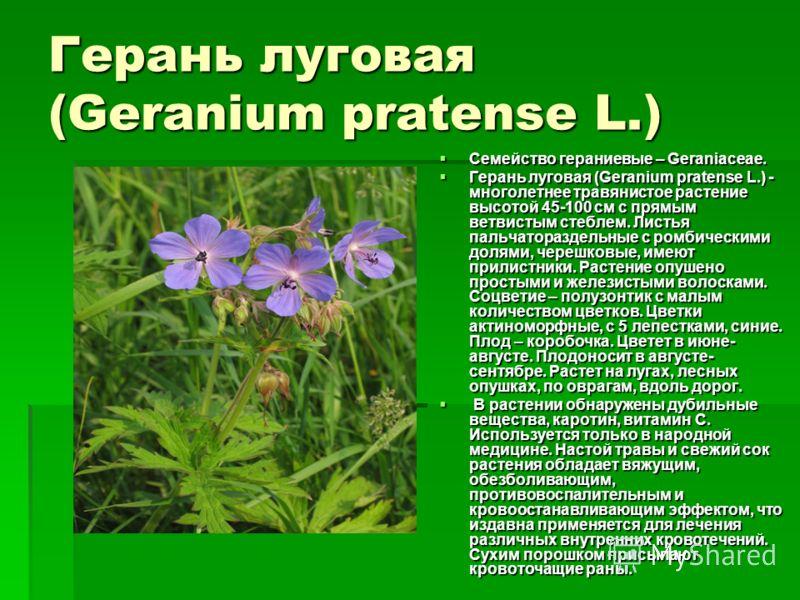 Герань луговая geranium pratense l семейство