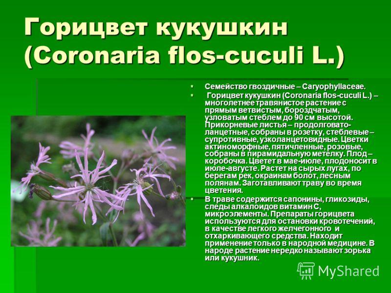 Горицвет кукушкин (Coronaria flos-cuculi L.) Семейство гвоздичные – Сaryophyllaceae. Семейство гвоздичные – Сaryophyllaceae. Горицвет кукушкин (Coronaria flos-cuculi L.) – многолетнее травянистое растение с прямым ветвистым, бороздчатым, узловатым ст