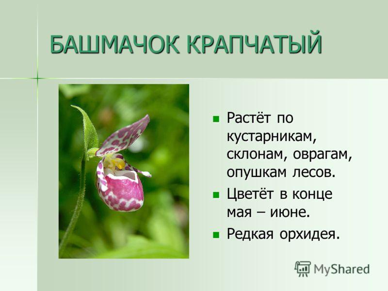 БАШМАЧОК КРАПЧАТЫЙ Растёт по кустарникам, склонам, оврагам, опушкам лесов. Растёт по кустарникам, склонам, оврагам, опушкам лесов. Цветёт в конце мая – июне. Цветёт в конце мая – июне. Редкая орхидея. Редкая орхидея.