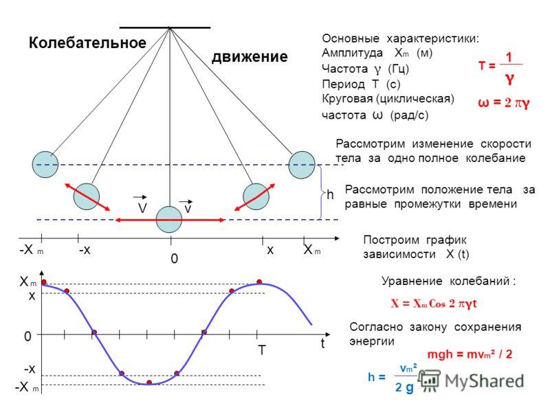 Колебательное Рассмотрим изменение скорости тела за одно полное колебание 0 Х m -X m Основные характеристики: Амплитуда X m (м) Частота γ (Гц) Период Т (с) Круговая (циклическая) частота ω (рад/с) V Рассмотрим положение тела за равные промежутки врем