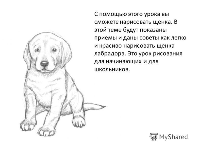 С помощью этого урока вы сможете нарисовать щенка. В этой теме будут показаны приемы и даны советы как легко и красиво нарисовать щенка лабрадора. Это урок рисования для начинающих и для школьников.
