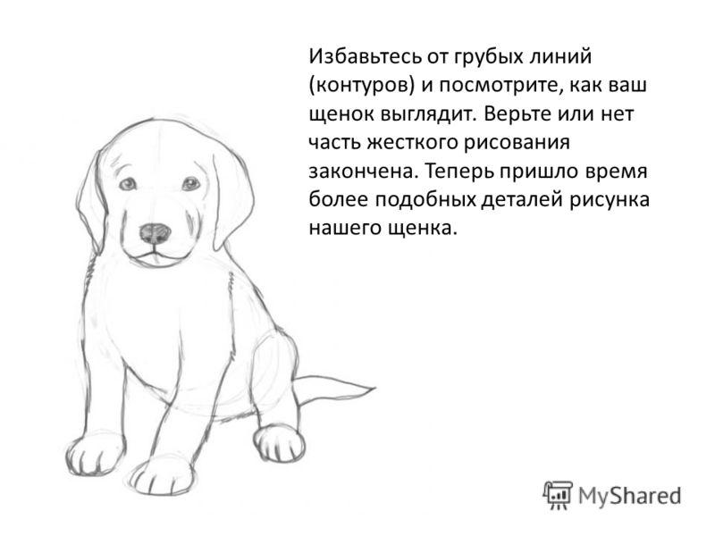 Избавьтесь от грубых линий (контуров) и посмотрите, как ваш щенок выглядит. Верьте или нет часть жесткого рисования закончена. Теперь пришло время более подобных деталей рисунка нашего щенка.