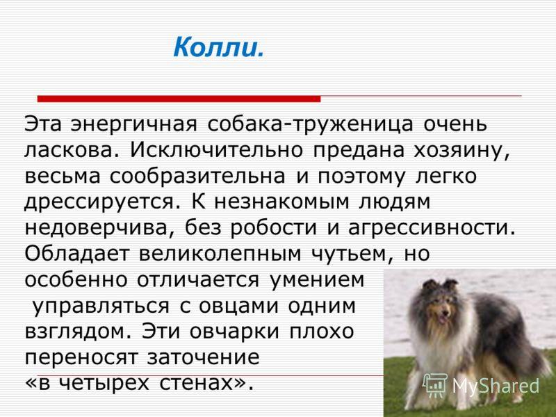 Эта энергичная собака-труженица очень ласкова. Исключительно предана хозяину, весьма сообразительна и поэтому легко дрессируется. К незнакомым людям недоверчива, без робости и агрессивности. Обладает великолепным чутьем, но особенно отличается умение