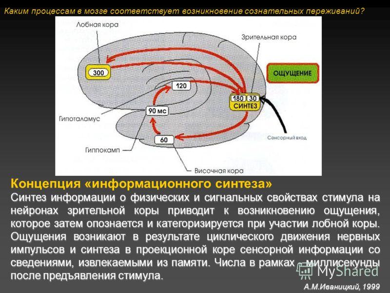 Концепция «информационного синтеза» Синтез информации о физических и сигнальных свойствах стимула на нейронах зрительной коры приводит к возникновению ощущения, которое затем опознается и категоризируется при участии лобной коры. Ощущения возникают в