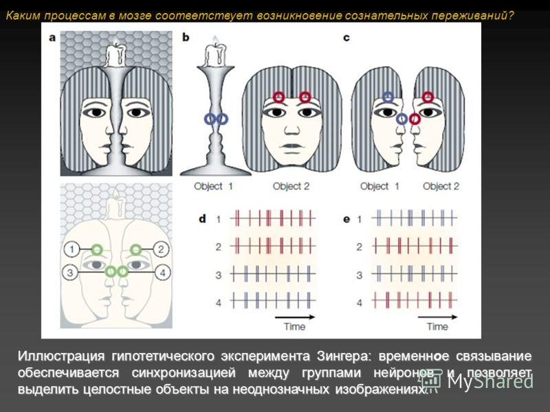 Иллюстрация гипотетического эксперимента Зингера: временное связывание обеспечивается синхронизацией между группами нейронов и позволяет выделить целостные объекты на неоднозначных изображениях. Каким процессам в мозге соответствует возникновение соз