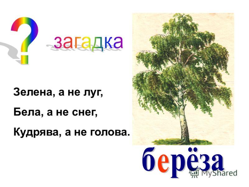 Зелена, а не луг, Бела, а не снег, Кудрява, а не голова.
