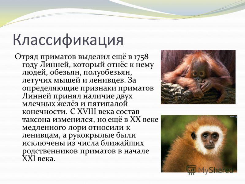 Классификация Отряд приматов выделил ещё в 1758 году Линней, который отнёс к нему людей, обезьян, полуобезьян, летучих мышей и ленивцев. За определяющие признаки приматов Линней принял наличие двух млечных желёз и пятипалой конечности. С XVIII века с