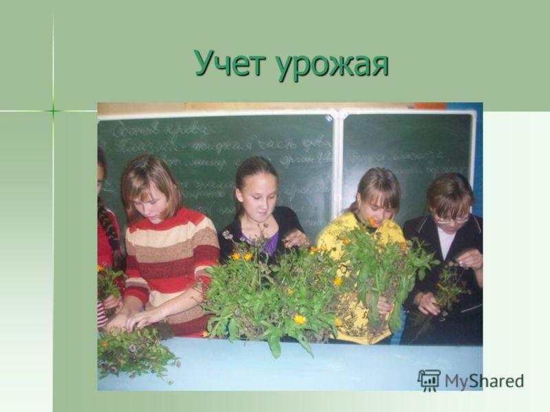 Учет урожая