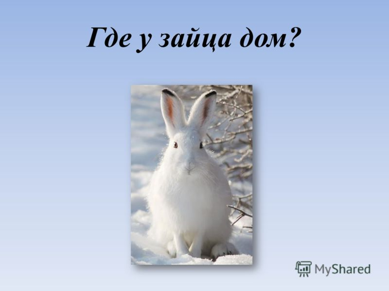 Где у зайца дом?
