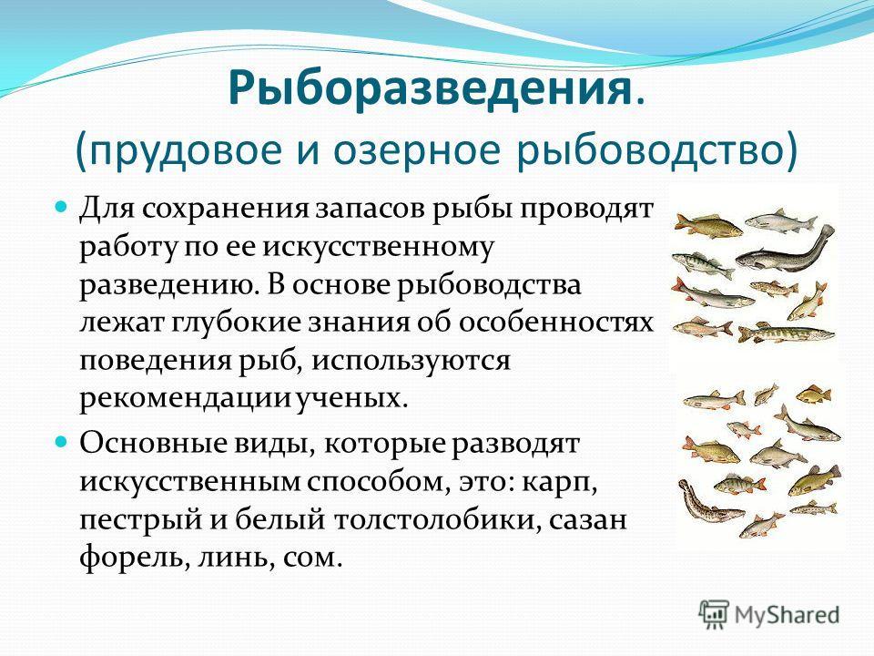 Рыборазведения. (прудовое и озерное рыбоводство) Для сохранения запасов рыбы проводят работу по ее искусственному разведению. В основе рыбоводства лежат глубокие знания об особенностях поведения рыб, используются рекомендации ученых. Основные виды, к