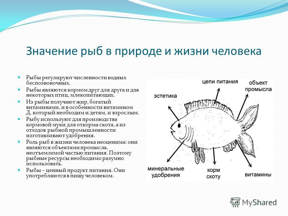 Значение рыб в природе и жизни человека Рыбы регулируют численности водных беспозвоночных. Рыбы являются кормом друг для друга и для некоторых птиц, млекопитающих. Из рыбы получают жир, богатый витаминами, и в особенности витамином Д, который необход
