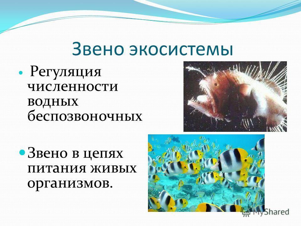 Звено экосистемы Регуляция численности водных беспозвоночных Звено в цепях питания живых организмов.