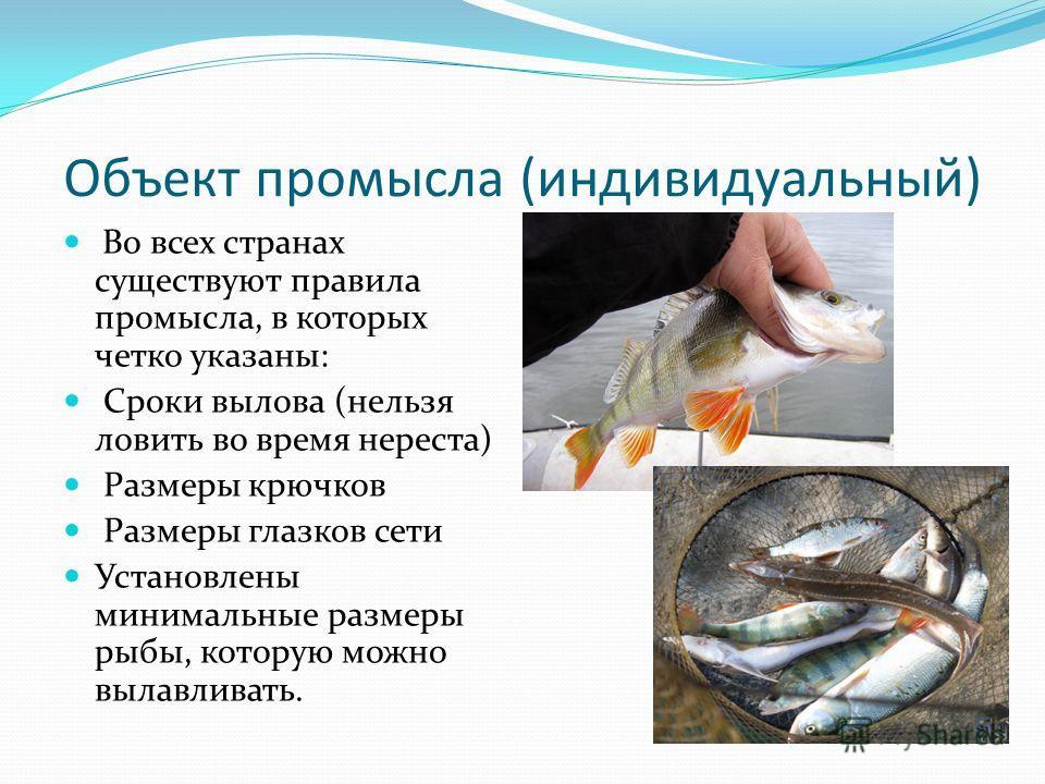 Объект промысла (индивидуальный) Во всех странах существуют правила промысла, в которых четко указаны: Сроки вылова (нельзя ловить во время нереста) Размеры крючков Размеры глазков сети Установлены минимальные размеры рыбы, которую можно вылавливать.