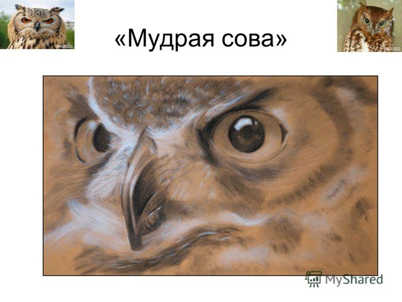 «Мудрая сова»