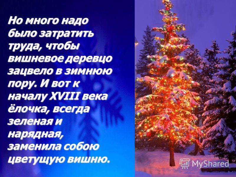 Это было прекрасно – за окном зима, снег, мороз, а в доме стоит вишневое деревцо, все в бело-розовых цветах, все разукрашенное огоньками свечей и игрушками. Это было прекрасно – за окном зима, снег, мороз, а в доме стоит вишневое деревцо, все в бело-