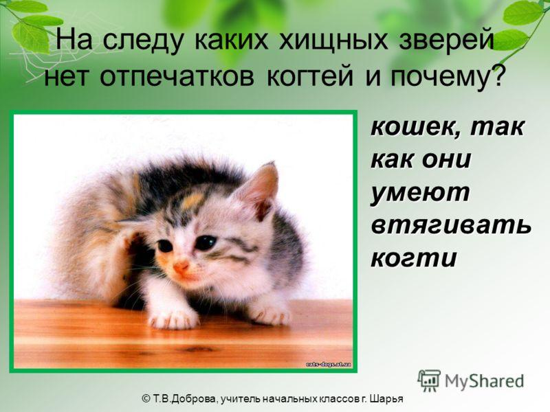 На следу каких хищных зверей нет отпечатков когтей и почему? кошек, так как они умеют втягивать когти © Т.В.Доброва, учитель начальных классов г. Шарья