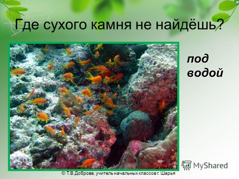 Где сухого камня не найдёшь? под водой © Т.В.Доброва, учитель начальных классов г. Шарья