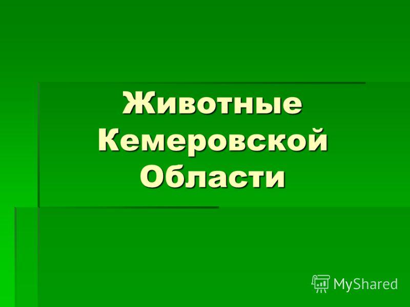 Животные Кемеровской Области