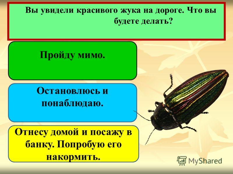 Вы увидели красивого жука на дороге. Что вы будете делать? Пройду мимо. Остановлюсь и понаблюдаю. Отнесу домой и посажу в банку. Попробую его накормить.