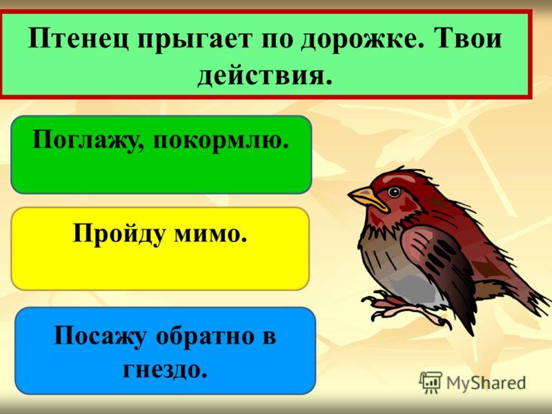 Птенец прыгает по дорожке. Твои действия. Поглажу, покормлю. Пройду мимо. Посажу обратно в гнездо.