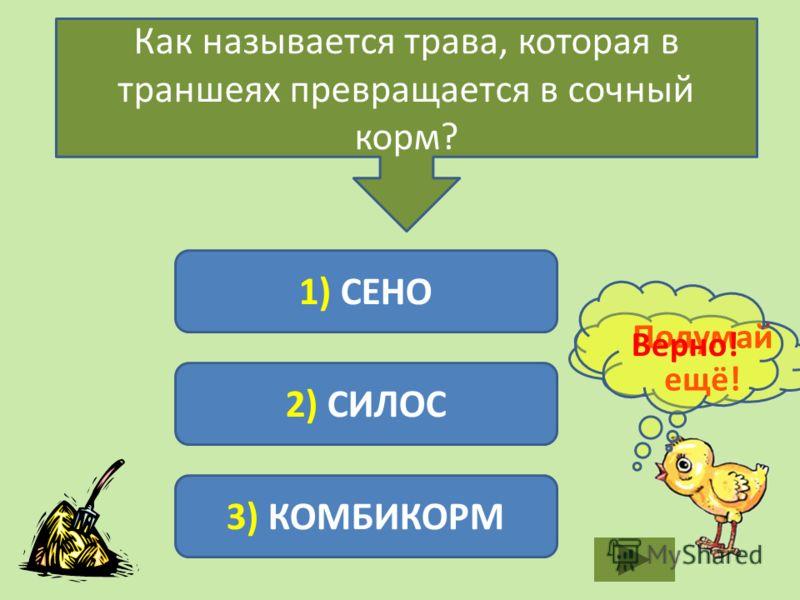 Как называется трава, которая в траншеях превращается в сочный корм? 1) СЕНО 2) СИЛОС 3) КОМБИКОРМ Подумай ещё! Верно!