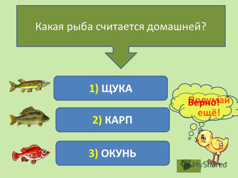Какая рыба считается домашней? 1) ЩУКА 2) КАРП 3) ОКУНЬ Подумай ещё! Верно!