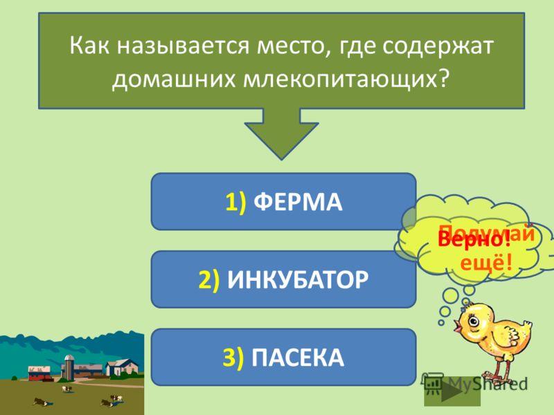 Как называется место, где содержат домашних млекопитающих? 1) ФЕРМА 2) ИНКУБАТОР 3) ПАСЕКА Подумай ещё! Верно!