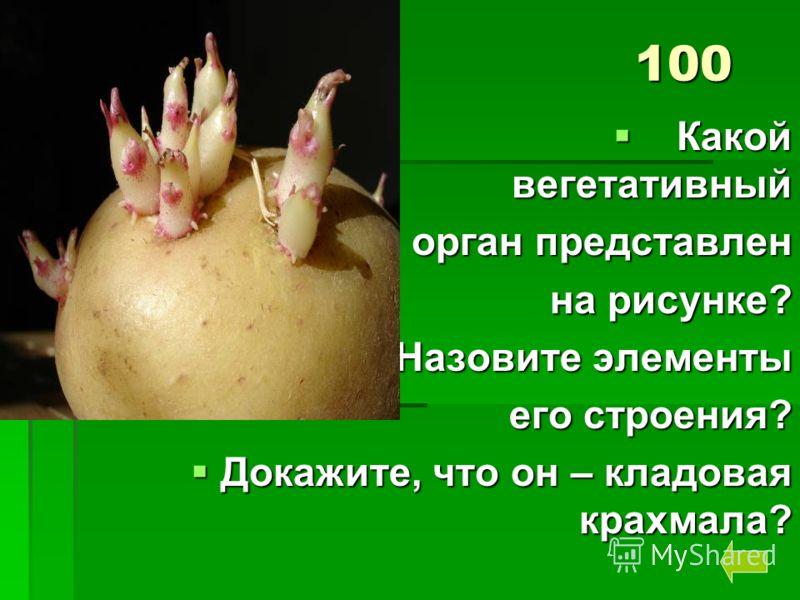 100 Какой вегетативный Какой вегетативный орган представлен на рисунке? на рисунке? Назовите элементы Назовите элементы его строения? Докажите, что он – кладовая крахмала? Докажите, что он – кладовая крахмала?